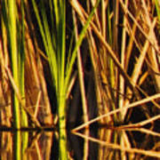 Abstract Reeds Triptych Top Print by Steven Sparks