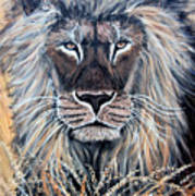 African Lion Print by Nick Gustafson