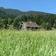 Alpine Meadow  Print by Carol Groenen