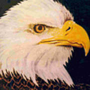 American Bald Eagle Print by Dy Witt