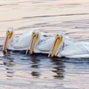 American White Pelicans Print by Bob Gibbons