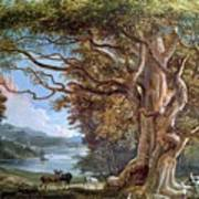 An Ancient Beech Tree Print by Paul Sandby