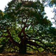 Angel Oak Tree 2004 Print by Louis Dallara