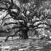 Angel Oak Tree Black And White Print by Melanie Snipes