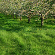 Apple Orchard Print by Sandra Cunningham