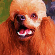 Apricot Poodle Print by Jai Johnson