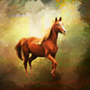 Arabian Horse Print by Jai Johnson
