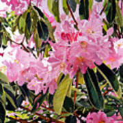 Arboretum Rhododendrons Print by David Lloyd Glover
