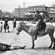 Atlantic City: Donkey Print by Granger