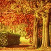 Autumn Colors Print by Wim Lanclus