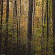 Autumn In The Woods Print by Andrew Soundarajan