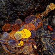Autumn Jewels.. Print by Al  Swasey