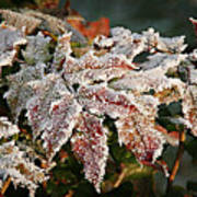 Autumn Leaves In A Frozen Winter World Print by Christine Till