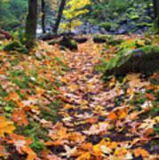 Autumn Path Print by Mike  Dawson