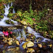 Autumn Stream Print by Chad Dutson