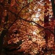 Autumn Sunshine Poster Print by Carol Groenen