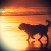 Beach Dog Print by Paul Topp