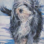 Bearded Collie In Snow Print by Lee Ann Shepard