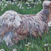 Bearded Collie Print by Lee Ann Shepard