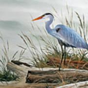 Beautiful Heron Shore Print by James Williamson