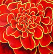 Big Red Flower Print by Geoff Greene