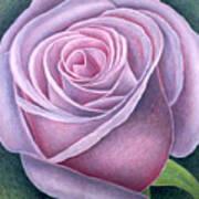 Big Rose Print by Ruth Addinall