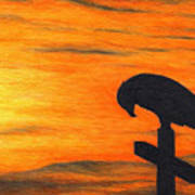 Bird Of Pray Print by Don McMahon