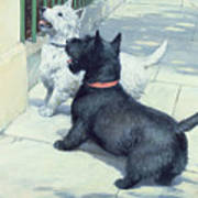 Black And White Dogs Print by Septimus Edwin Scott