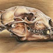 Black Bear Skull Print by Darlene Watters