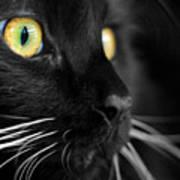 Black Cat 2 Print by Craig Incardone