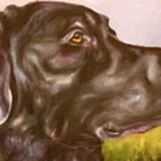 Black Lab In The Field Print by Susan A Becker