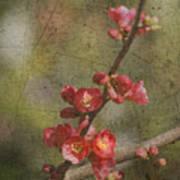 Blossoms Print by Rebecca Cozart