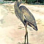 Blue Heron On Shell Beach Print by Shawn McLoughlin