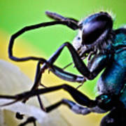 Blue Wasp On Fruit Print by Ryan Kelly