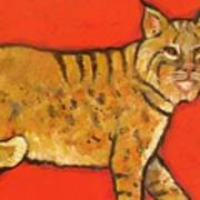 Bobcat Watching Print by Carol Suzanne Niebuhr