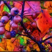 Bradford Pear In Autumn Print by Judi Bagwell