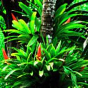 Bromeliads El Yunque National Forest Print by Thomas R Fletcher