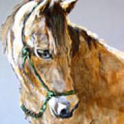 Buck Of The Morgan Horse Ranch Point Reyes National Seashore Print by Paul Miller