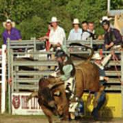 Bull Rider Print by Phyllis Britton
