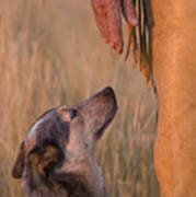 Buster And Dawg Print by Carol Walker