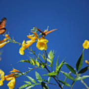 Butterfly In The Sonoran Desert Musuem Print by Donna Greene