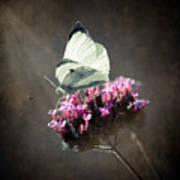Butterfly Spirit #02 Print by Loriental Photography