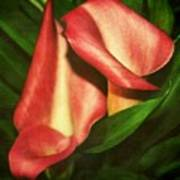 Calla Lillys Print by Cathie Tyler