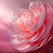 Camellia Print by Carol Cavalaris