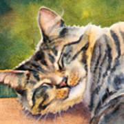 Cat Nap Print by Bonnie Rinier