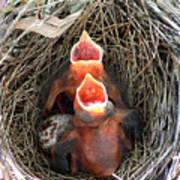 Cavernous Cardinals Print by Al Powell Photography USA