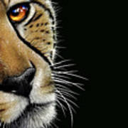 Cheetah Print by Jurek Zamoyski