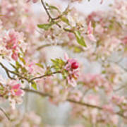 Cherry Blossom Delight Print by Kim Hojnacki