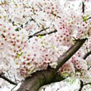 Cherry Blossom Print by Sky Noir Photography by Bill Dickinson