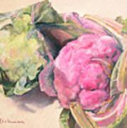 Choux Print by Muriel Dolemieux